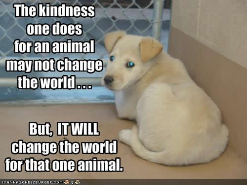 kindness to dogs