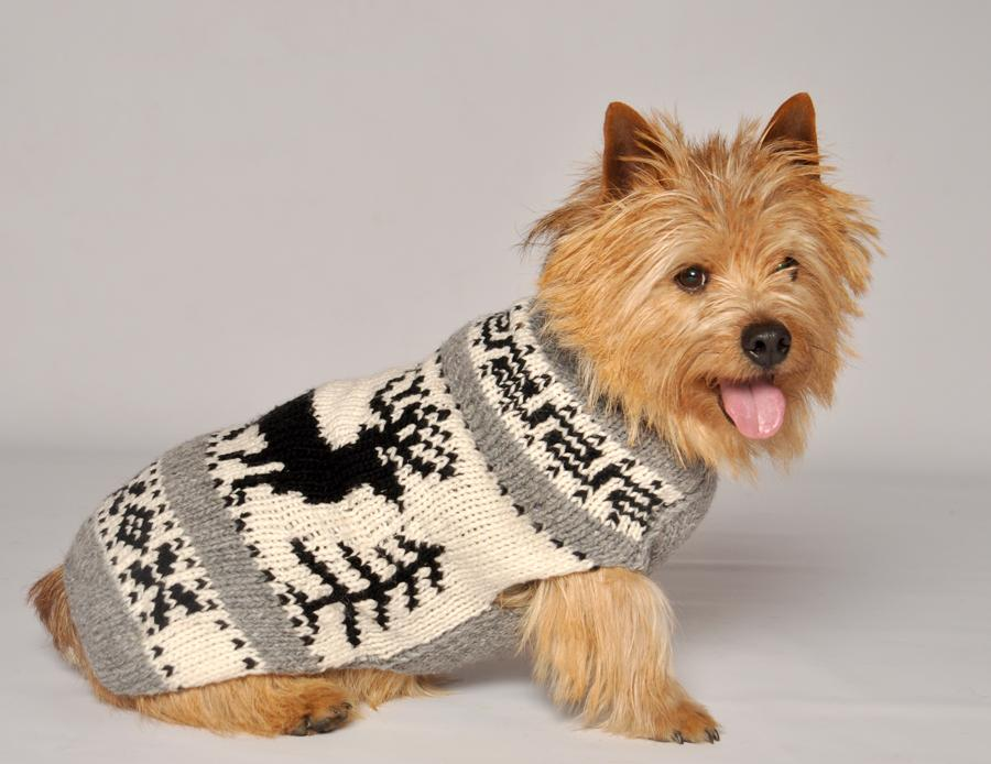 winter-care-tips-dog-coat-sweater