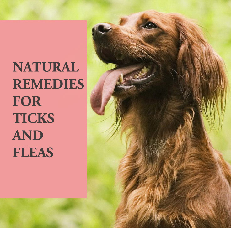 Home remedies for ticks and fleas