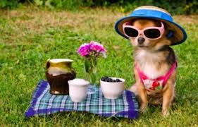 how to plan a picnic with your pet?