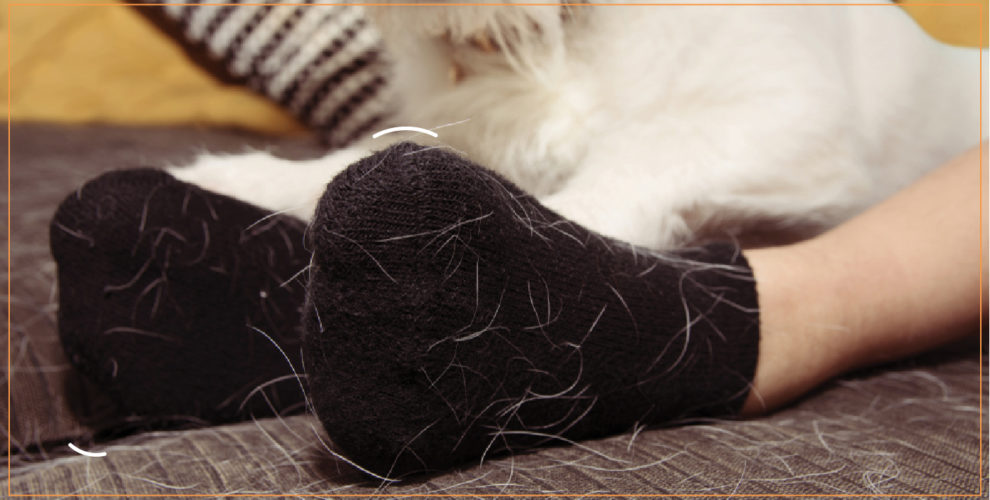 How to control Puppy Hair Shedding